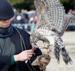 Falconer Taiga Ogishima feeds a goshawk during the annual new year falconry demonstration by Suwa Falconry Preservation Society at Hama rikyu Gardens park in Tokyo Tuesday, Jan. 3, 2012. (AP Photo/Koji Sasahara)