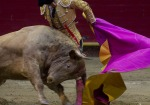 Colombian bullfighter Juan Solanilla  makes his performance with a bull during a bullfight at La Macarena bullring on February 4, 2012 in Medellin, Antioquia deparment, Colombia. AFP PHOTO / Raul ARBOLEDA