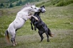 amazing animal pictures 44 580x382